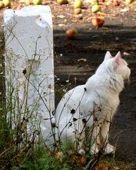 Katze #5 - Katze, Hauskatze, weiss, Haustier, Pose, posieren, Profil