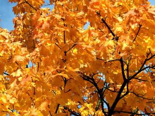So malt der Herbst... - Herbst, Jahreszeit, Herbststimmung, Herbstfarben, Herbstlaub, Laub, Laubfärbung, Baum, Blätter, Stimmung, bunt, Farbkontrast, Kontrast, grün, orange, gelb, blau, golden, Himmel, Herbstfärbung, Komplementärfarben, Komplementärkontrast