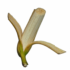 Banane teilweise geschält - Banane, Bananen, Obst, beliebt, Schale, gelb, essbar, Staude, exotisch, Frucht, Früchte, schälen, geschält
