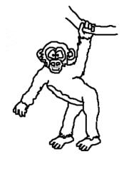 Affe - Schimpanse - Affe, Äffchen, Schimpanse, Chimpanzee, Monkey, Säugetier, Primat, Primate, Menschenaffe, Wildtier, Cartoon, Zeichnung, Clipart