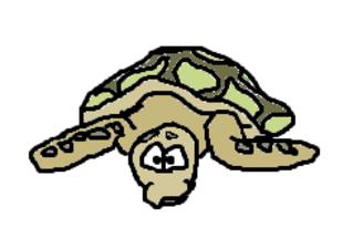 Schildkröte - Schildkröte, Meeresschildkröte, Landschildkröte, Turtle, Panzer, Flossen, Tier, Reptil, langsam, Cartoon, Zeichnung, Clipart
