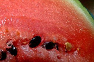 Melone Fruchtfleisch mit Kern - Melone, Melonen, Stück, rot, Wassermelone, Kürbisgewächs, Frucht, Kern, Kerne, Anlaut M