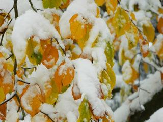 Herbst - Winter#2 - Herbst, Winter, Laub, Schnee, Blatt, Blätter, gelb, orange, weiß, Wetter, Wettererscheinung, Jahreszeit, bedeckt, Niederschlag