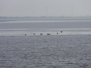 Seehundsbänke - Sandbank, Seehunde, Seehundsbank, Elbe, Nordsee, ausruhen, Tourismus