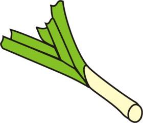 Lauch - Lauch, Porree, Stange, Anlaut L, Gemüse, Wörter mit au, Wörter mit ch
