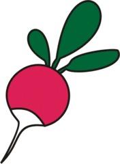 Radieschen - Radieschen, Wurzel, rosa, scharf, Anlaut R, Gemüse, Wurzelgemüse, Wörter mit ie