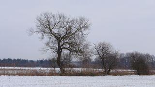 Bäume in Winterlandschaft - Baum, kahle Bäume, kahl, unbelaubt, Winter, Landschaft, Winterlandschaft, Schneelandschaft, Schnee, Schneedecke, verschneit, Kälte, Einsamkeit, Ruhe, Stille, Schreibanlass, Meditation
