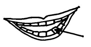 Zähne - Körper, Körperteile, body, body parts, Zahn, Zähne, Mund, Gebiss, Wörter mit h
