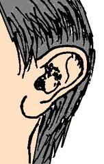Ohr 2 - Ohr, Kopf, Körper, Körperteile, body, body parts, head, ear, Ohr, Ohrmuschel, hören, Sinne, Sinnesorgan, zuhören