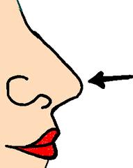 Nase - Nase, Körper, Körperteile, body, body parts, nose, Geruchsinn, Sinnesorgan, Luft, Atmen, Atmung