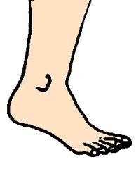 Fuß - Fuß, Bein, Körper, Körperteile, body, body parts, foot, leg, Zeh, Zehen, Knöchel, Ferse, Wörter mit ß