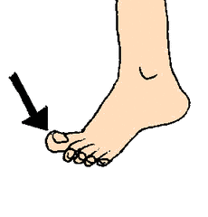 Zeh - Zeh, Fuß, Körper, Körperteile, body, body parts, toe, foot