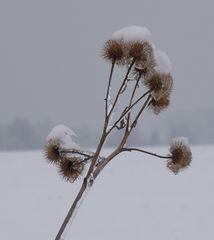 Pflanze unter Eis # 01 - Eis, Tauwetter, Winter, gefrorenes Wasser, Tropfen, Aggregatzustand