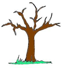 Baum - Baum, Wald, Garten, Natur, braun, Anlaut B, Wörter mit au