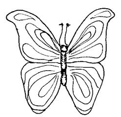 Schmetterling - Schmetterling, Falter, fliegen, Anlaut Sch, Illustration, Symmetrie