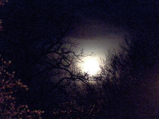 Mondlicht im Wald - Licht, Dunkelheit, Schreibanlass, Mond, Mondlicht, leuchten, grusel, Fantasiereise, Erwartung, dunkel, hell, Vollmond, Meditation, Symbol, symbolisch, Baum, Bäume, Aste, Blick, Mystik, mystisch, ängstlich, Angst, gruselig, Traum, Nacht, gespenstisch, Erzählanlass, Schreibanlass, finster, unheimlich, düster