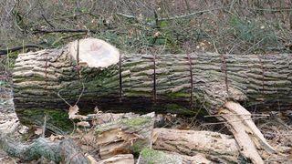 Waldarbeit - Holz, Brennholz, Holznutzung, Forstwirtschaft, Wald, Feuerholz, Nutzholz, Waldarbeit