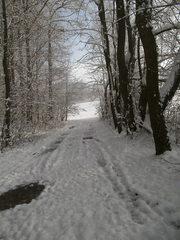 Verschneiter Waldweg #1 - Wald, Waldweg, Weg, Pfad, Winter, Schnee, verschneit, unbelaubt, romantisch, einsam, Laubbäume