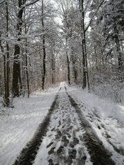 Verschneiter Waldweg #4 - Wald, Waldweg, Weg, Pfad, Winter, Schnee, verschneit, unbelaubt, romantisch, einsam, Laubbäume, Spur, Schneespur