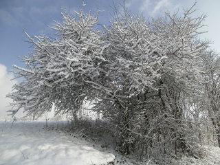 Verschneiter Baum #1 - Baum, kahle Bäume, kahl, unbelaubt, Winter, Landschaft, Winterlandschaft, Schneelandschaft, Schnee, Schneedecke, verschneit, Kälte, Einsamkeit, Ruhe, Stille, Schreibanlass, Meditation