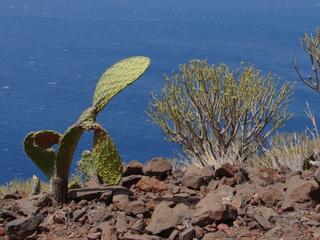 Trockenvegetation auf Teneriffa 5 - Busch, Strauch, Trockenvegetation, Teneriffa, San Andrés