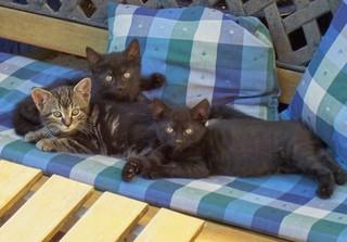 unsere Rasselbande - Haustiere, Katzen, Kater, Katze, Kätzchen, drei, Menge, Jungtier, schauen, neugierig
