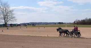 Kutsche - Kutsche, Zweispänner, Haflinger, Pferd