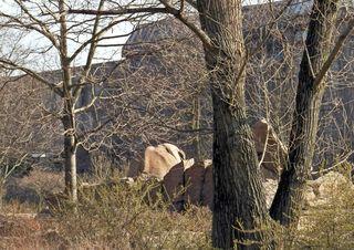 Welches Tier hat sich hier versteckt? - Elefant, Anpassung, anpassen, Tier, Säugetier, Versteck, verstecken, täuschen, optische Täuschung, Zoo, Tierpark