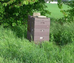Bienenstock - Biene, Bienenstock, Honig, sammeln, bunt, Nisthöhle, Behausung, Volk, Bienenvolk, Honigbiene, Beute, Magazin-Beute, Bienenzucht, Imkerei, Imker