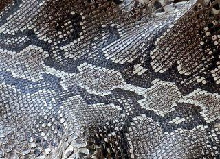 Haut einer Python - Haut, Zeichnung, Struktur, Schlange, Python, Epidermis, schuppig, Schuppen, kreatinhaltig, Hornschicht, Färbung