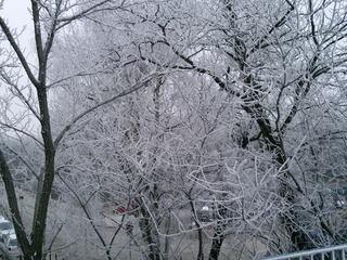 Frost an Bäumen - Baum, kahle Bäume, kahl, unbelaubt, Winter, Landschaft, Winterlandschaft, Schneelandschaft, Schnee, Schneedecke, verschneit, Kälte, Einsamkeit, Ruhe, Stille, Schreibanlass, Meditation