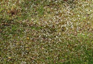 Hagelkörner auf der Wiese - Hagel, Wetter, Eis, Niederschlag, Eisklumpen, Eishagel, Schloße, Hagelkorn