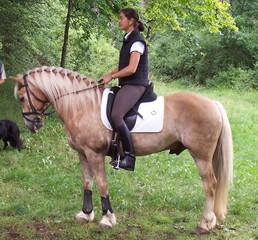 Pony  - Haflinger, Pferd, Pony, Tiere, Haustiere, Pferde, reiten