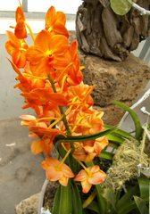 Orchideenblüte - Orchidee, Blüte, Pflanze, Zierpflanze