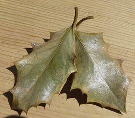 seltener Schmetterling - Ilex, Rätselbilder, Schmetterling