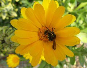 Wespe - Insekt, Insekten, Wespe, Körperteile, Flügel