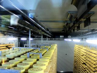 Käseherstellung im Appenzeller Land (CH) #4 - Käse, Käseherstellung, Schaukäserei, Handwerk, Käserei, Appenzell, Appenzeller, Milch, Laib, Laibe, Rinde, Salz, Lebensmittel, Tradition, Schweiz, Chemie, Ernährunglehre, Milchsäuregärung, Gärung, Gerinnung, Fermentierung, Kasein