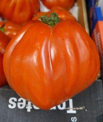 Riesentomate #1 - Tomatenpflanze, Tomate, Tomate, Pflanze, Paradeiser, Paradiesapfel, rot, reif, Nachtschattengewächs, Blätter, einjährig