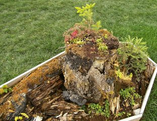 Wachstum auf Totholz - Totholz, Pflanzen, Pilze, Flechten, Ökosystem, Wald, Lebensraum, Insekten
