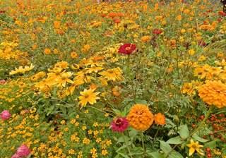 Sommerbeet in orange#1 - Sommer, Blumen, orange, Gartenbeet, Blumenbeet, Kunst, Farbenlehre