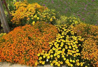 Blumenbeet in orange und gelb#1 - Sommer, Blume, Blumen, orange, Sommerblumen, Kunst, Farbenlehre, Gartenanlage, Beet, Blumenbeet