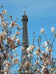 Eiffelturm und Magnolie - Paris, Eiffelturm, Tour Eiffel, Magnolie