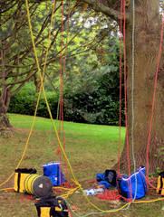 Baumpflege #3 - Baumpflege, Baum, Bäume, pflegen, Pflege, sägen, schneiden, klettern Seil, Seile, Klettertechnik, Beruf, Ausbildung