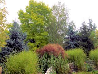 Es grünt so grün... - grün, Bäum, Bäume, Büsche, Park, Natur, Blätter, mischen, Farben, Grüntöne, abtönen, Kunst, Mischtöne, Naturtöne
