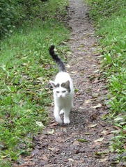 Katze  - Katze, Hauskatze, streunen, Schreibanlass