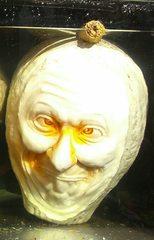 Kürbisgeist #1 - Kürbis, Gemüse, Herbst, orange, Halloween, Horror, erschrecken, Gesicht, Jahreszeit, Kürbisgeist, schnitzen, gruselig