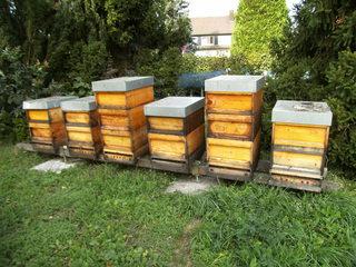 Bienenkästen#1 - Bienen, Schwarm, Natur, Imkerei, Bienenvolk, Bienenschwarm, Bienenkasten, anlocken, Quader, sechs
