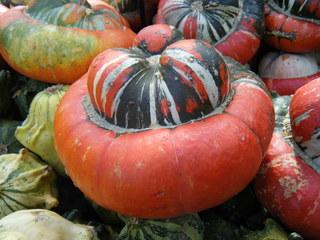 Kürbis - Kürbis, Gartenpflanze, Pflanze, Kürbisgewächs, Gemüsekürbis, Gartenkürbis
