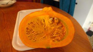 Hokkaido-Kürbis - Kürbis, Gartenpflanze, Pflanze, Kürbisgewächs, Gemüsekürbis, Gartenkürbis