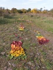 Herbstlaub Fußspuren - Herbst, Laub, Herbstlaub, Natur, Kunst, Fußspuren, Naturkunst